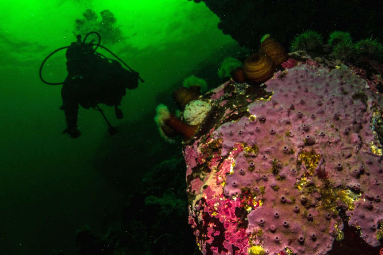 Plongeur à proximité d'une éponge