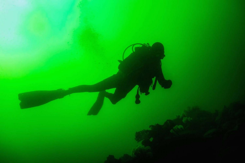 plongeur grand vert