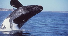 Une baleine dans le désert - Patrick Laurent